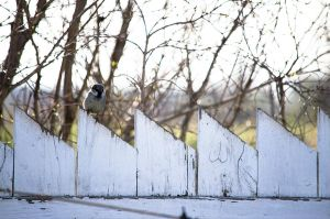 Sparrow on a Fence 2 by alyssvisuals