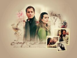 Tony+Ziva Blend by memorabledesign