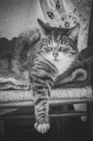 Wiskey the cat by DaisyreeB