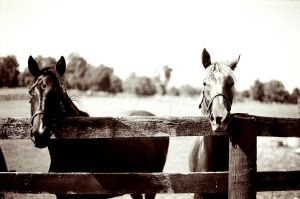 Pair of Weanlings by steph-f