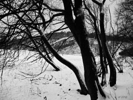 Trees in winter-series 2 by sonafoitova