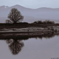 Winter reflections. by MarioGuti
