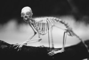 cute little dead monkey by chirilas