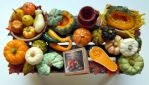 The miniature world of pumpkins and squashes by miniacquoline