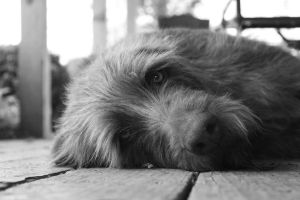 Dog by hcrobber