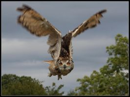 Eagle Owl Flight by cycoze