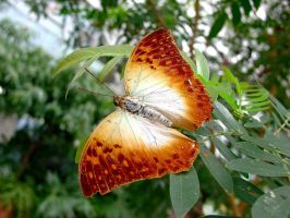 Butterfly Beauties 2 by Stargem