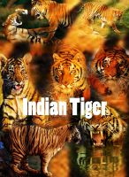 Indian Tigers by Svennemi