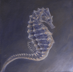 seahorse by kailavmp