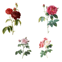 Mix_Flowers_PNG by chaseandlinda