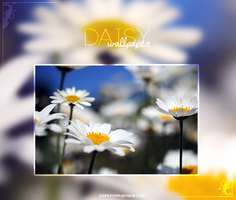 Daisy {Wallpaper} by Julieta7599