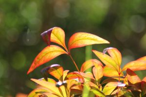 Sunny leaves by Tamamantix