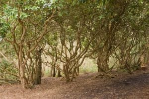 Trees Stock by Sheiabah-Stock