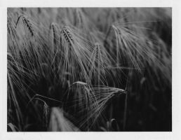 Graflex crown graphic test. by tristt