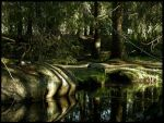 Forest pond by tonpa