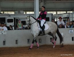 Dressage Horse Stock 1 by lee-mare