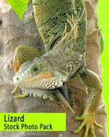 Lizard Stock Photo Pack by OnTheStock