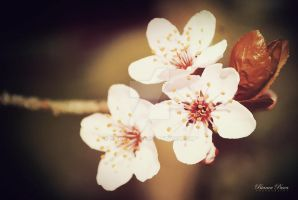 Spring Flowers by sibeworld