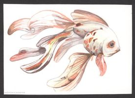 Goldfish ACEO (3 out of 12) by unSpookyLaughter