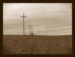 Field of Poles by syrenemyst