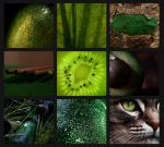 Patchwork - Nuances of green by Ankh-su-namun