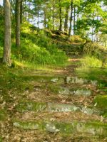 Forest Stairs by 116802