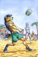 Volleyball by Kahito-Slydeft