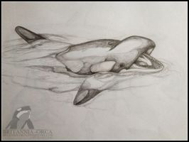 pencil sketch of orca by Britannia-Orca