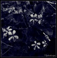Sombres melodrames by Psychasthenique