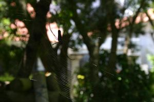 EMO: Spiderweb by askewlemming