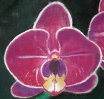Orchid close up by Crystalen-Designz