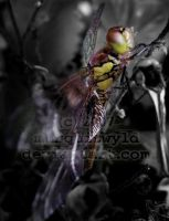 young dragonfly pt3 by marquiswyld