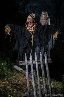 Scarecrow by Snaecka