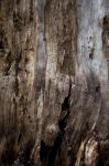 Wood Textures by RobertRobledo