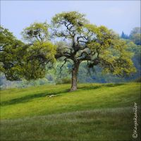 Rainbow Oak in Spring Colors by kayaksailor