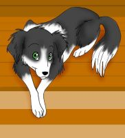 border collie on porch by g0ddess