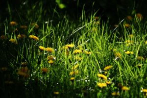 Green Grass by Scorpidilion
