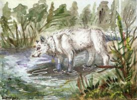 ACEO for Alassa by LupusShetani