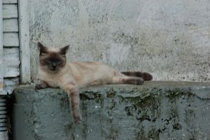 Cat on Ledge by RJeff-Stock
