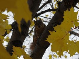 squirrel by KateKannibal