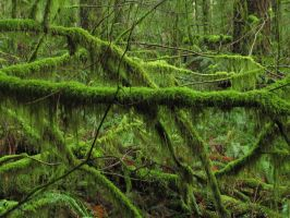 Moss by MoonchildLuiza