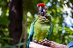 Parrot by wmandra