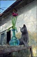 Cat With Flower Arrangement2 by squirrel-chaser