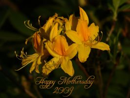 Happy Mothersday 2009 by webcruiser