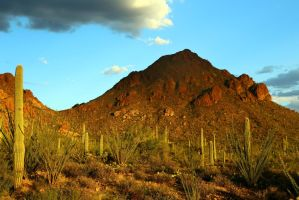 Saguaro 3280 by Mammoth-Hunter