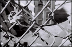 caught in the fence by mbroadway26