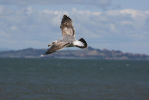 Flying sea gull by Dr-J-Zoidberg