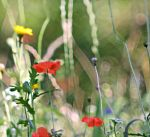 Summer meadow by hundefreund