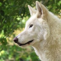 Lakota at six years old by FamilyCanidae