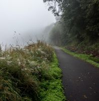 Foggy Trail-2 by KariLouMc
